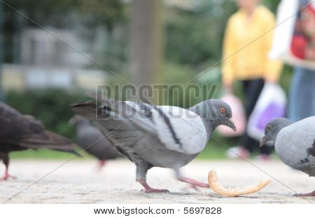 Two city pigeons and bread crust. Streets of Prague poster