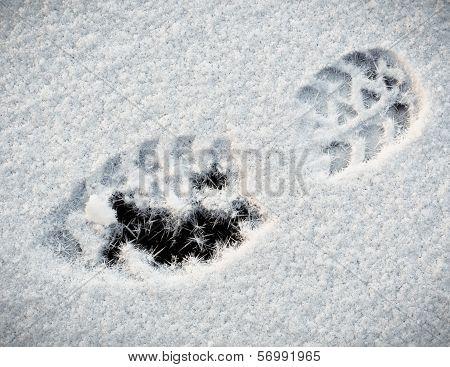Shoe print In Snow