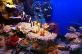 Underwater background - fishes and coral. Beuty and natural water. poster