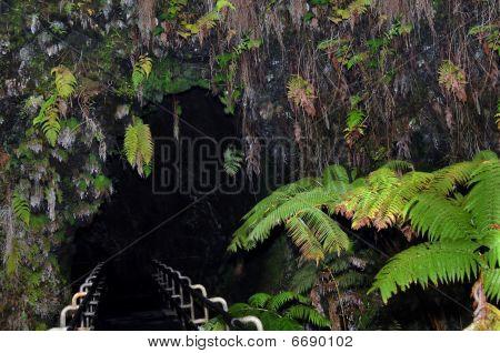 Big Island Thurston Lava Tube