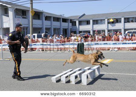 Police Dog Jumping