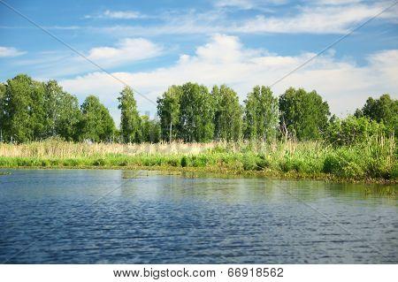 Siberian Nature, Riverside