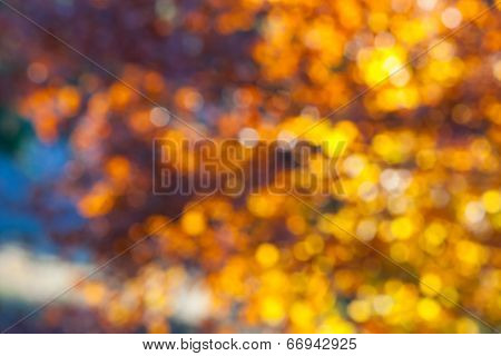 Abstract Light Through Tree Leaves