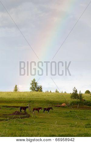 Rainbow And Horses