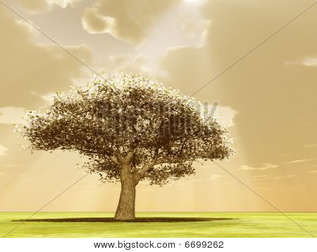 Blossoming Tree In The God Rays