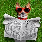 dog reading newspaper and relaxing on grass in the park poster