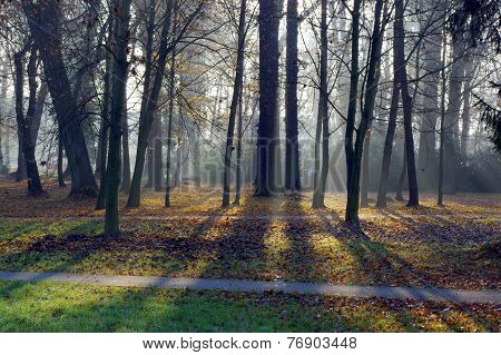 Autumn morning in the park.