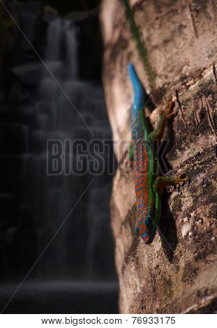 Gecko by the waterfall