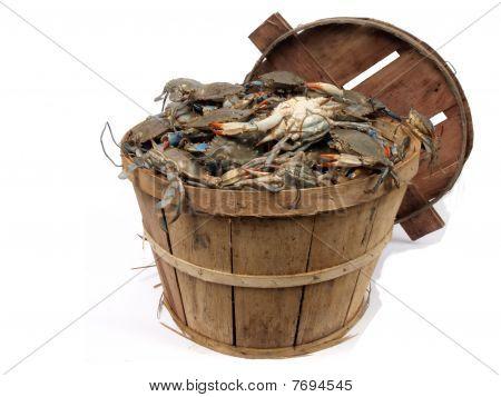 Bushel Basket Of Crabs