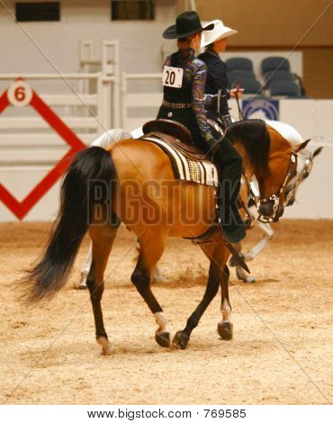 Loping at the horse show