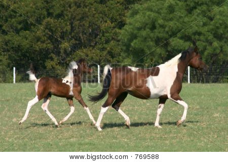 Mare and foal trotting