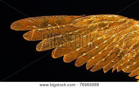 Golden Metal Wing