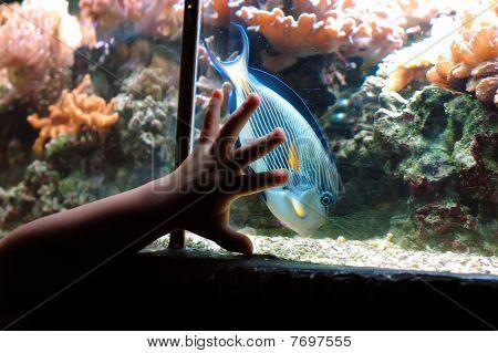 Hand And Fish