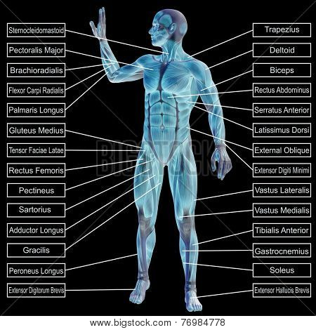 Concept or conceptual 3D male or human anatomy, a man with muscles and text isolated on black background  poster