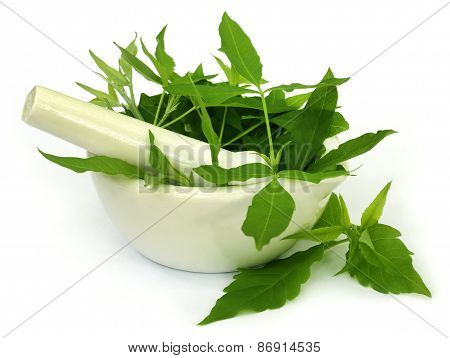 Medicinal Nishinda Leaves With Mortar And Pestle