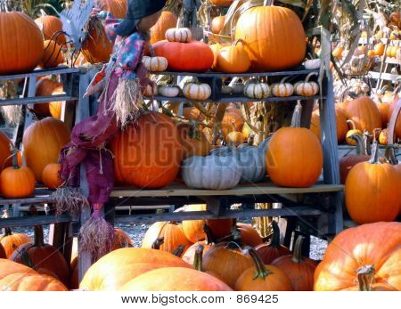 Pumpkins Everywhere
