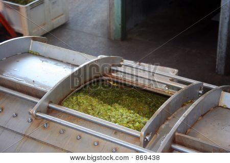 Grapes in Wine Press