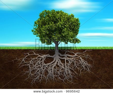 The Tree And Rood