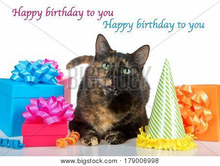 Tortie Torbie Tabby cat laying down on reflective table surrounded by bright colorful birthday presents party hat isolated on a white background. Mouth open as if talking. Happy birthday to you text