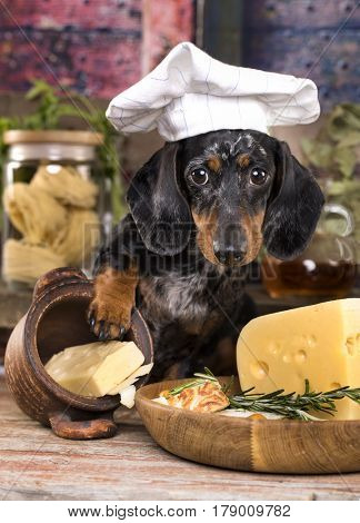 dog in a chef's cap and a piece of cheese