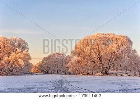 winter landwinter landscape trees in frost at dawn in a pink sun and the road horizontallyscape trees in frost at dawn in a pink sun