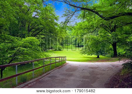 Road receding past leafy green trees in picturesque park.