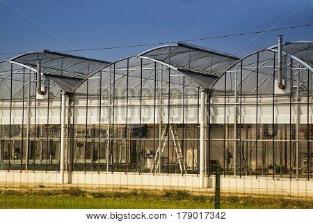 Greenhouse under blue sky close up horizontal image