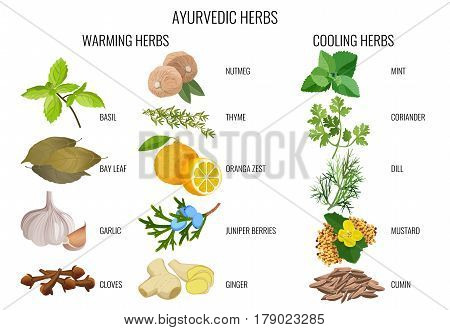 Ayurvedic warming and cooling herbs banner. Bay leaf, orange zest, juniper berries, mustard and cumin seeds, coriander and dill branches etc. Vector collection on white of healthy condiment signs