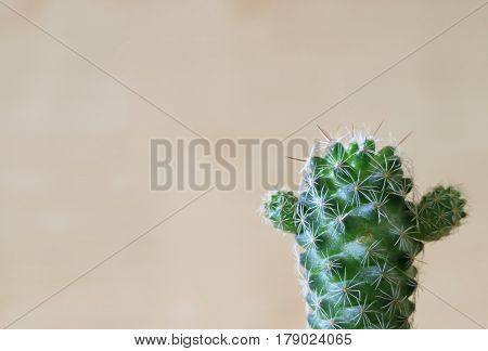 Close-up of a Green Mini Cactus on the Wooden wall