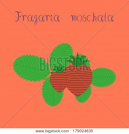flat illustration on stylish background plant Fragaria