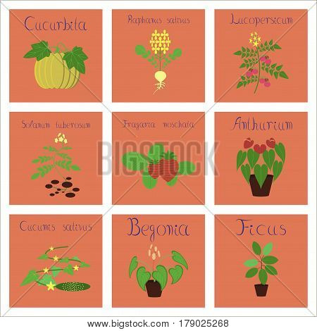 assembly of flat Illustrations nature Cucurbita raphanus tomato Solanum Cyperus Ficus Cucumis Anthurium Fragaria Begonia