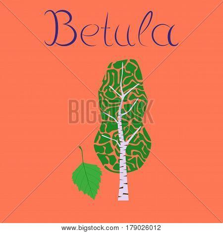 flat illustration on stylish background plant Betula