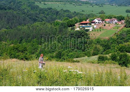 Caucasian woman on the hill picks flowers in the springtime