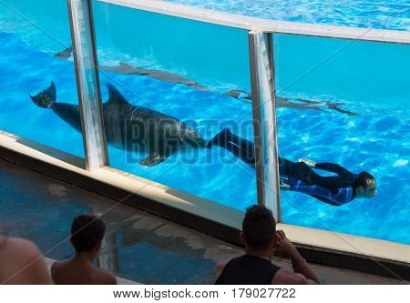 Zoomarine, Roma Italy - September  7,  2016: Clear water with amazing dolphins. Park Dolphinarium.Man swims with dolphins in basseyne.Delfin man pushes his nose. Spectators watch representation of dolphinarium.