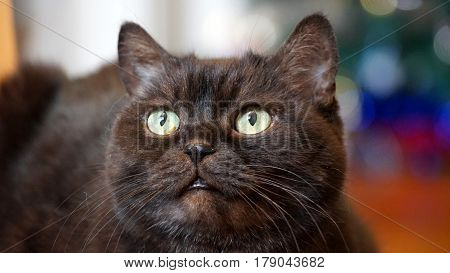 Black Cat Looking At You