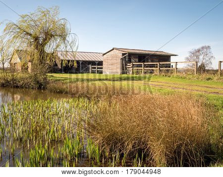 A rural English farmyard scene with wooden horse stables set by a natural pond and willow tree enjoying early spring growth.