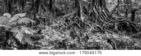 Tree roots and ferns in tropical jungle