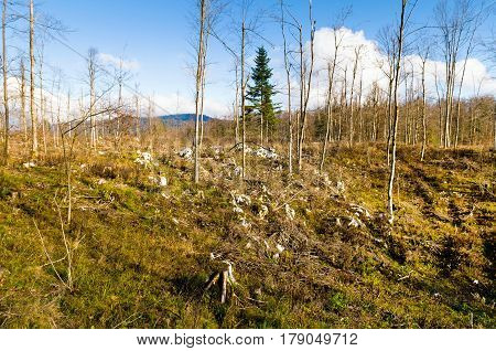 Mixed forest stand devastated after sleet (Europe, Slovenia) in 2014.