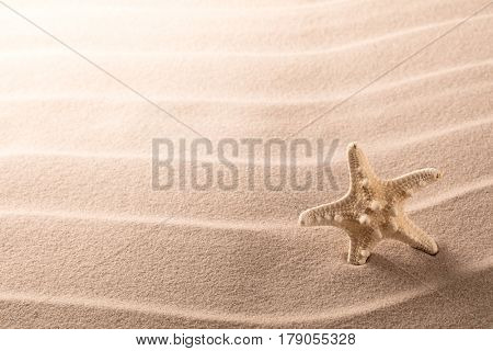 lonely sea star fish or starfish standing on the rippled beach sand. Starfish texture background with copy space.