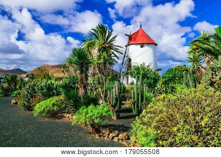 Traditional countryside of Lanzarote island. Canary islands