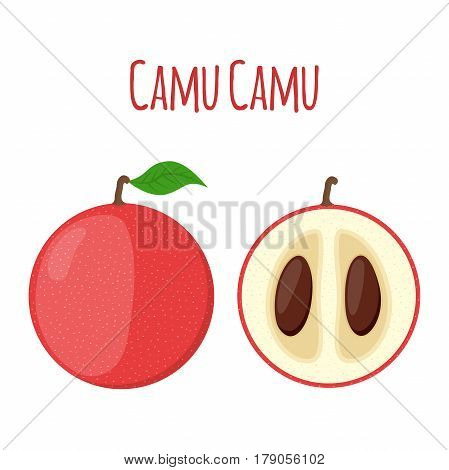 Superfood camu camu in cartoon flat style. Red camu berries, fruit and powder. Vegetarian nutrition.