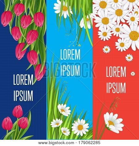 Spring greeting card set with blooming tulip and chamomile flower festive vector illustration. Floral decorated spring design, love celebration concept, nature feast congratulation, botany template