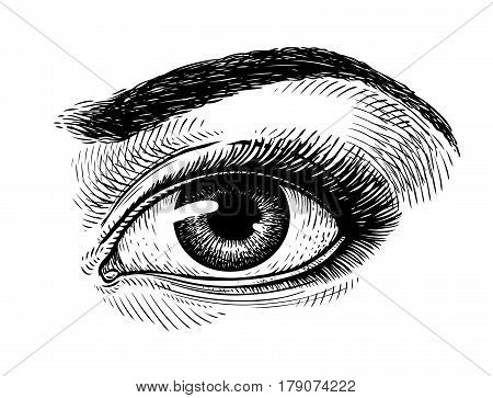 Hand-drawn beautiful female eye, sketch. Makeup, beauty salon symbol. Vintage vector illustration isolated on white background