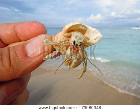 Catch Hermit crab (diogenes-crab) with beach background