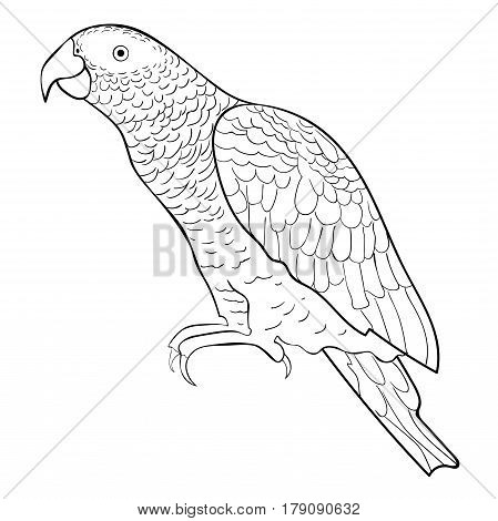 Coloring Jaco Parrot The Red-with Shadows Africa. Vector Illustration