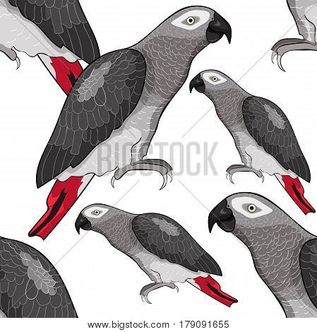 Seamless Pattern Jaco Parrot The Red-with Shadows Africa. Vector Illustration