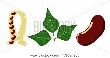 Red beans pea pod and red bean leaf on white background - vector