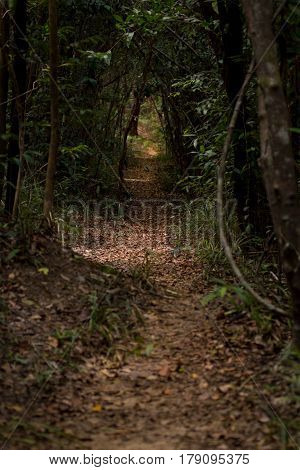 Leaf covered track path through dense forest jungle. Conceptual route direction way forward.