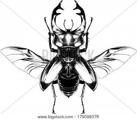 stag beetle with open wings flying top view of symmetry sketch vector graphics black and white drawing