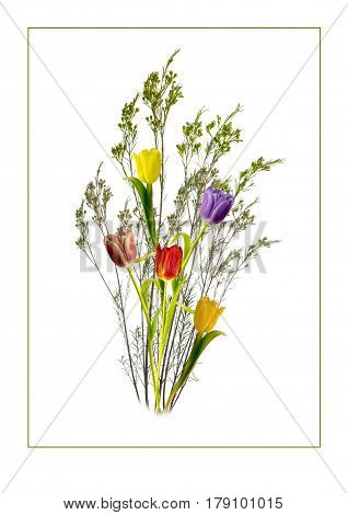 View of a bunch of tulips and twigs on a white background